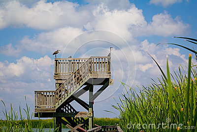 Observation Birding Tower
