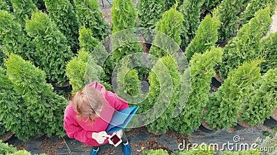 Occupazione: un fioraio donna controlla un grande arborvitae sempreverde Vista aerea Agricoltura, commercio online, decorazione video d archivio