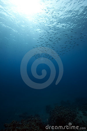 Free Ocean And Fish Stock Image - 14077851