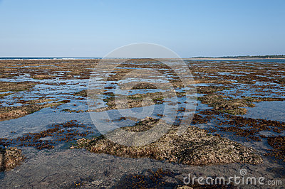 Ocean and beach with green seagrass at sunset