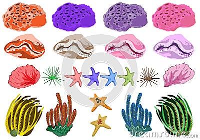 Ocean coral in
