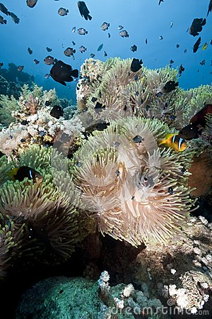 Ocean, Coral And Anemone Royalty Free Stock Photos - Image: 9928608