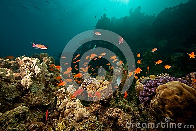 Ocean, coral, sun and fish