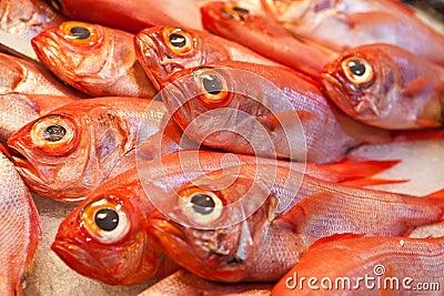 Ocean fish on ice