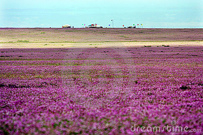 An ocean of flowers