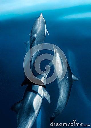Free Ocean Flyers Royalty Free Stock Photo - 3060045