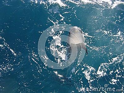 Ocean free Dolphin