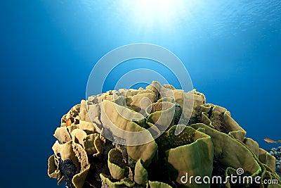 Ocean and leaf coral
