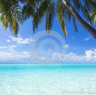 Ocean, palm, paradise