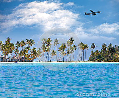 The ocean and a palm tree.Sea tropical landscape