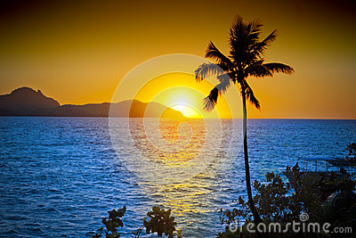 Ocean Palm Tree Sunset Sky