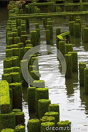 Ocean Pier Ruins far