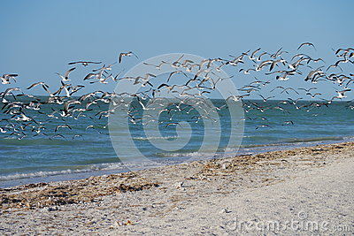 Ocean sea panorama mexico with gulls and sea birds