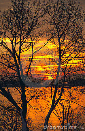 Ocean Sunrise Through Leafless Trees