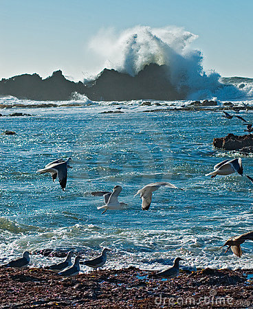 Free Ocean Surf And Seagulls Royalty Free Stock Photography - 387007