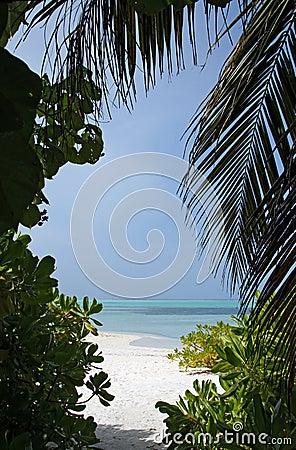 Ocean View through Tropic Vegetation