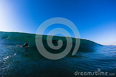 Ocean Wave Dolphins Surfer  Editorial Photography