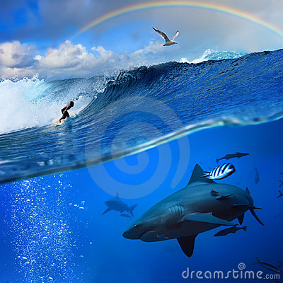 Free Ocean With Surfer Rainbow Breaking Wave And Shark Royalty Free Stock Photos - 17455378