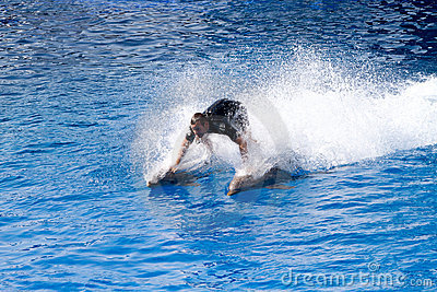 Oceanographic Dolphins  Show Editorial Image