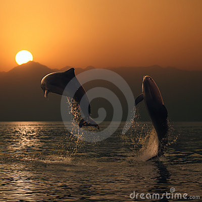 Free Oceanview Two Beautiful Dolphins Leaping From Sea Royalty Free Stock Photography - 17745617