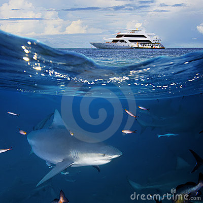 Oceanview  yacht and bull shark