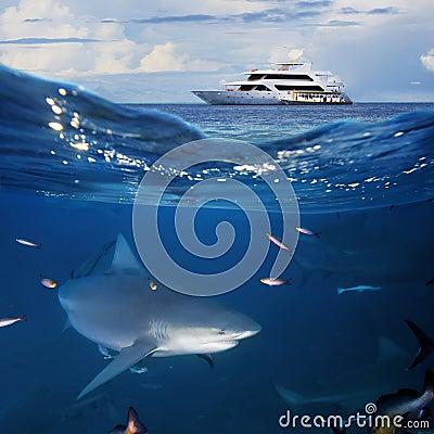 Oceanview  yacht and bull shark