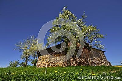 Ochard hut