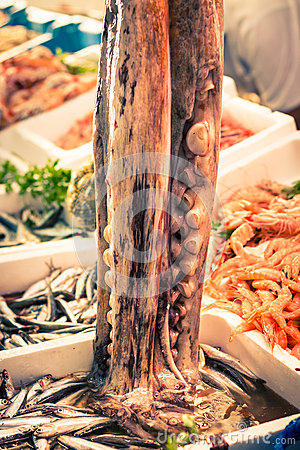 Free Octopus Royalty Free Stock Photography - 27692797