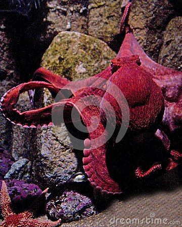 Free Octopus Stock Photography - 35393192
