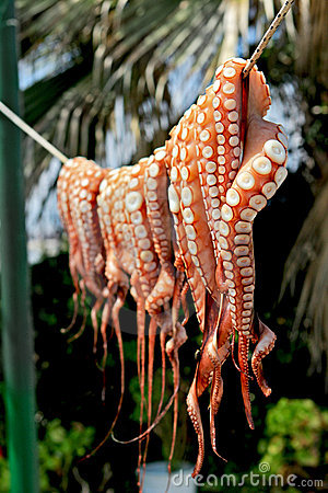 Octopus Hanging to dry