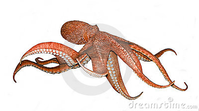 Octopus on white