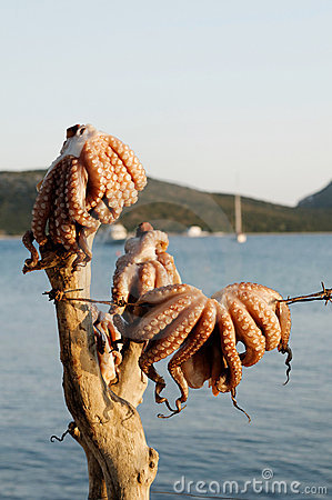 Octopuses hanging by sea