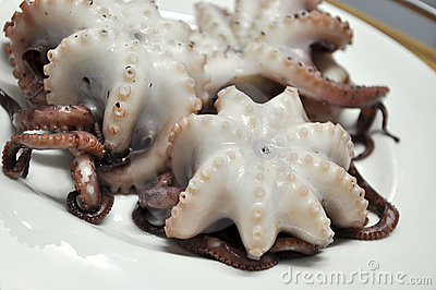 Octopuses on plate.