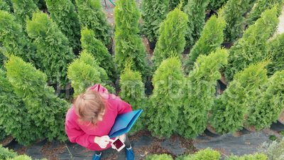 Ocupación - una florista mujer controla un gran arborvitae siempre verde Vista aérea Agricultura, comercio en línea, decoración almacen de metraje de vídeo