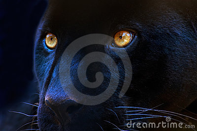 Oczy drapieżnika