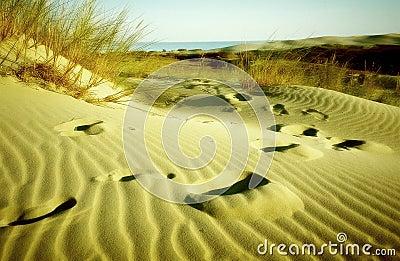 Odcisk stopy piasku