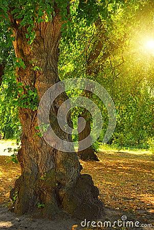Odd tree and sun