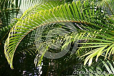 Oddział zielone światło słoneczne palmowego