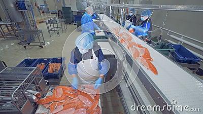 Odtransportowanie mechanizm przenosi kawałki ryba dla przetwarzać Rybia fabryka zdjęcie wideo