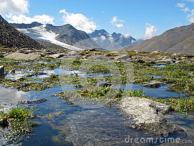 Oetztal: Wet mountain meadow