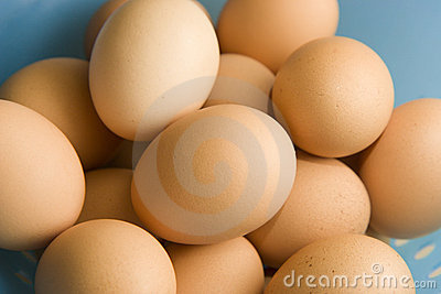 Oeufs de Brown