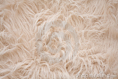 Off-white or cream-colored furry background