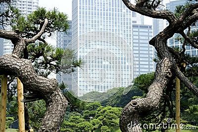 Office buildings surrounding Japanese garden