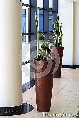 Free Office Plants Stock Photo - 4681070