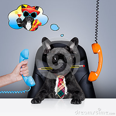 Free Office Worker Boss Dog Stock Image - 63016451