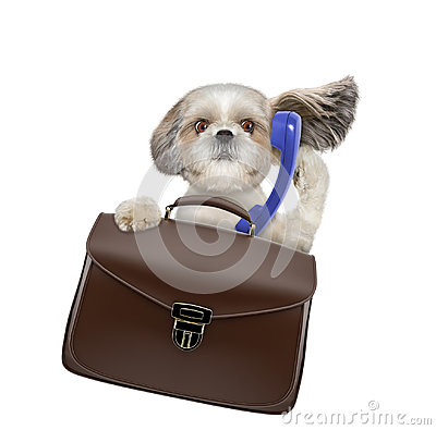 Free Office Worker Businessman Shitzu Dog With Suitcase Or Bag Isolated On White Stock Photos - 98431703