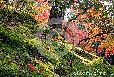 Ogród jesieni