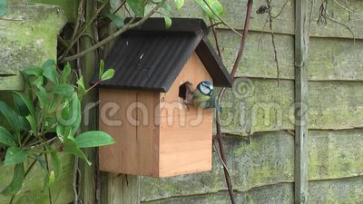 Ogrodowy ptaka błękitnego tit gniazdować zbiory