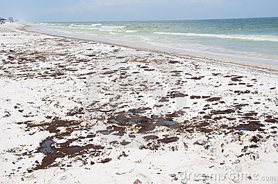 Oil on long stretch of Pensacola Beach Editorial Stock Image