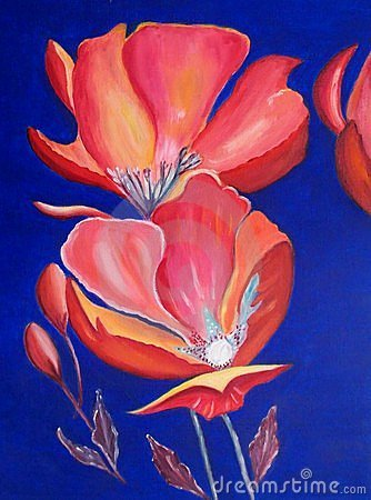 Oil painting : bright red poppies